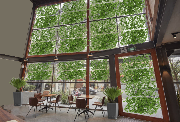 green coffee house
